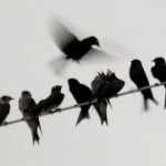 Like Birds on a Telephone Wire …